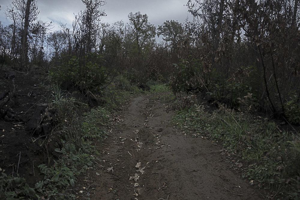 Pianura, Napoli, 2017. Sentiero che conduce alla Discarica di Contrada Pisani.