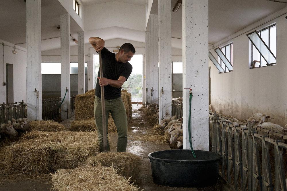 Andrea Camassa, titolare dell'azienda agricola Madaro, situata lungo il tracciato del gasdotto TAP. Ad oggi l'azienda agricola è quasi irraggiungibile per via della militarizzazione del territorio. Melendugno, Settembre 2017. © Giuseppe Laera