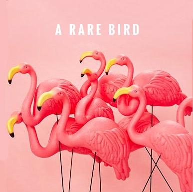 Rare Bird.jpg