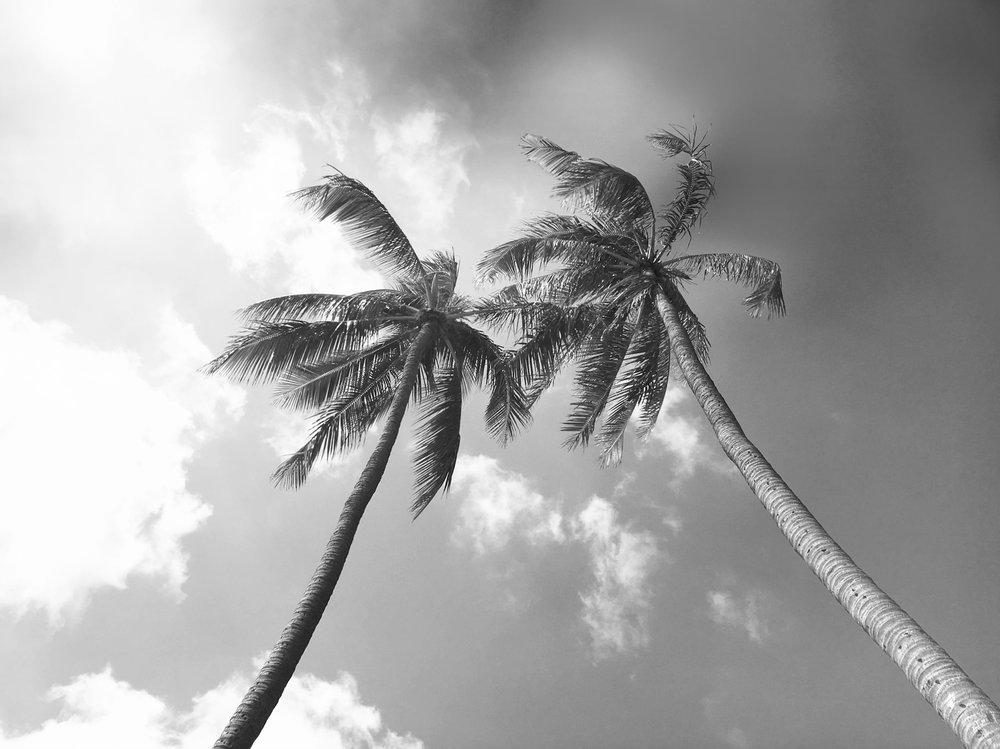 BW_Palms.jpg