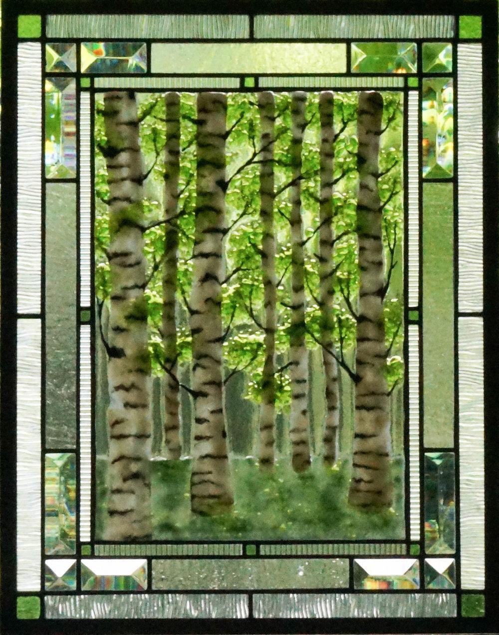 Birch Trees (2).jpg