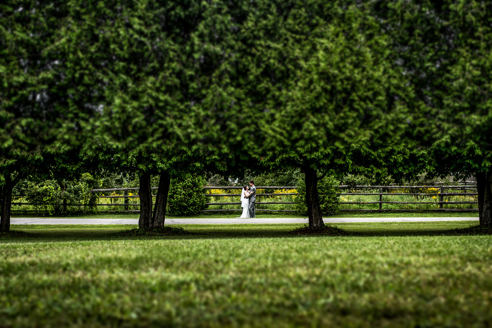 bride groom portrait orhchard view wedding manotick ontario