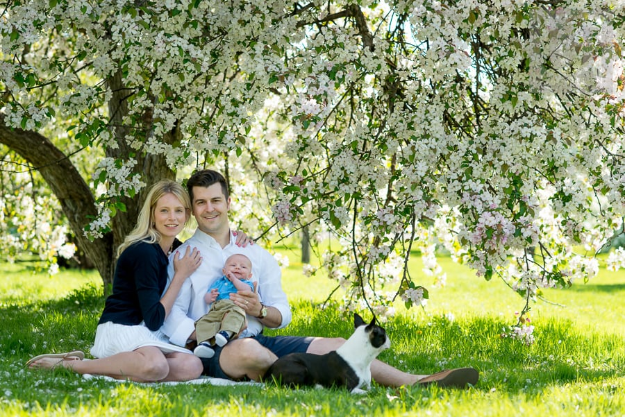 mother and father holding newborn baby while sitting on a blanket with their dog under cherry blossoms at Experimental Farm
