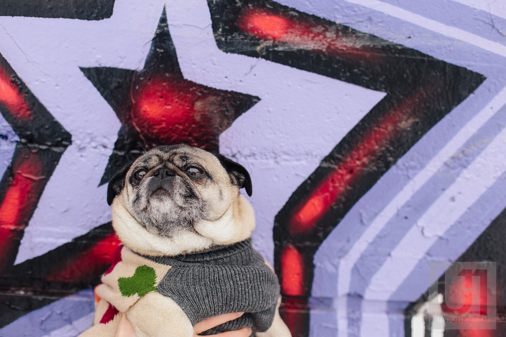 Engagement shoot with the couples pug in front of a graffiti wall in Ottawa