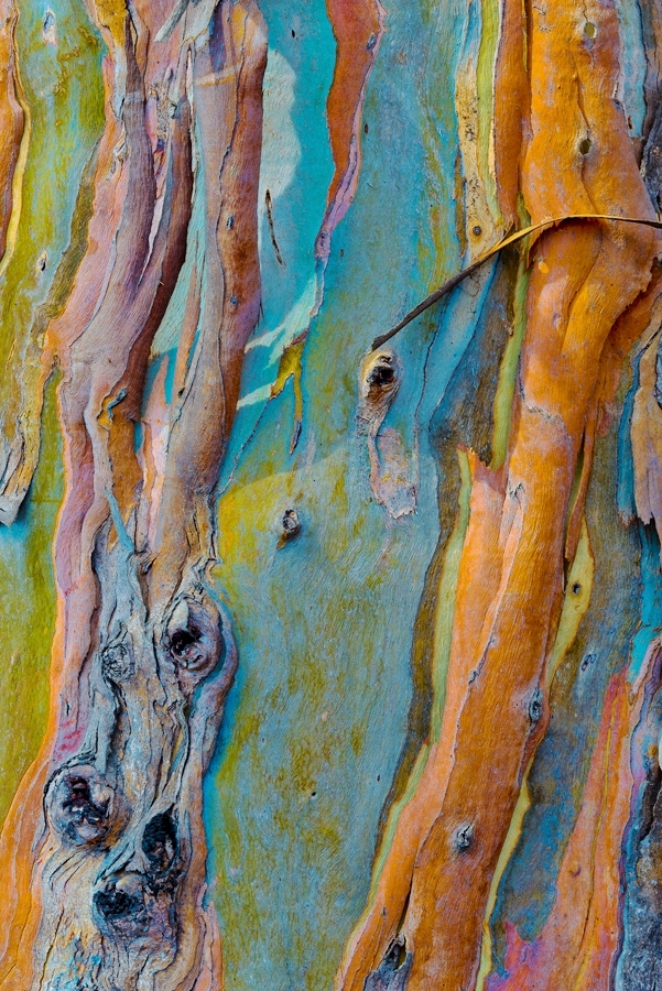 Detail, Eucalyptus Bark
