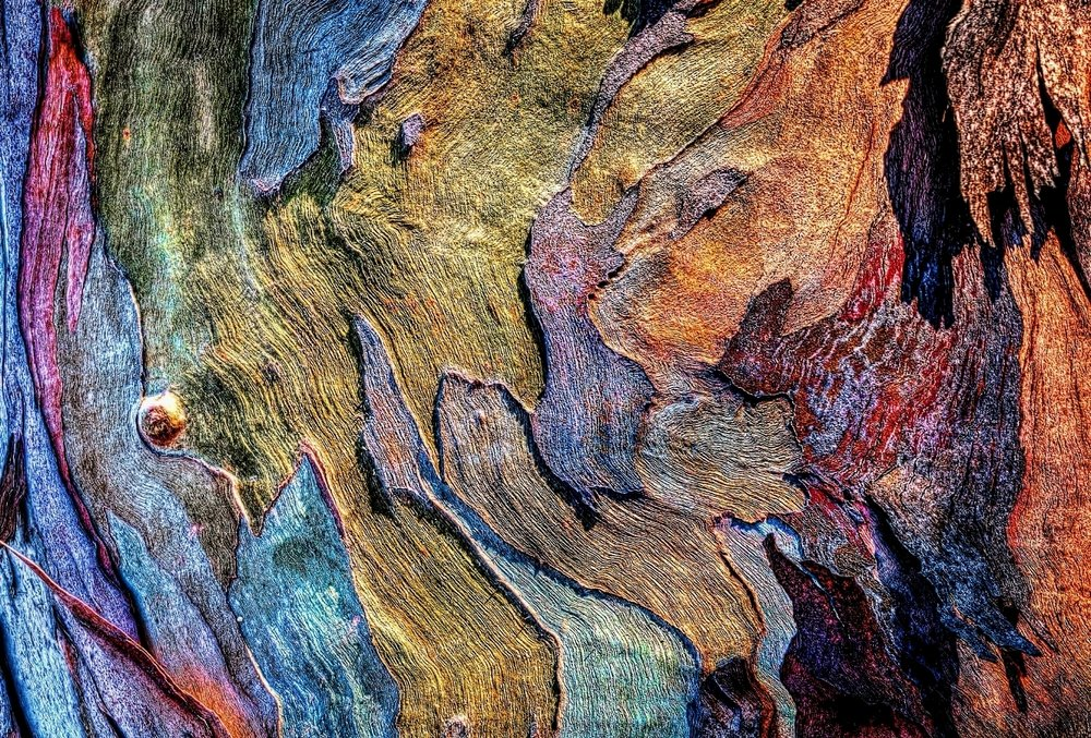 Detail, Eucalyptus Bark 55