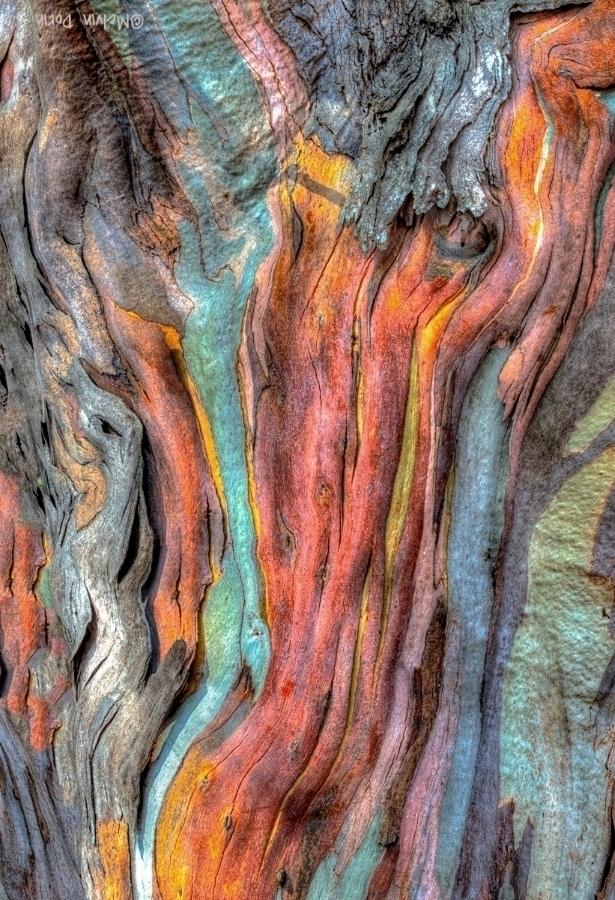 Detail, Eucalyptus Bark #1, San Simeon