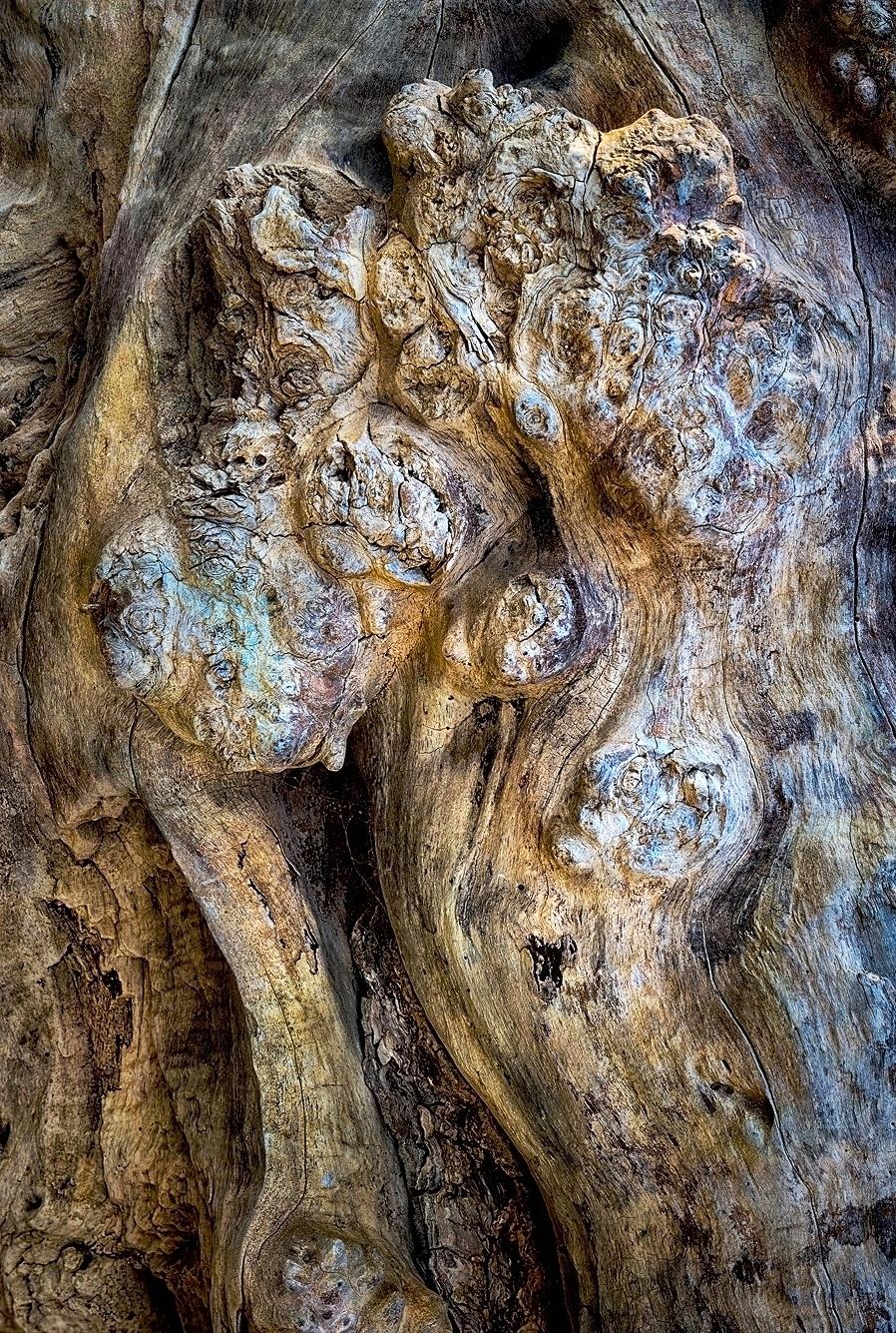 Driftwood Detail D