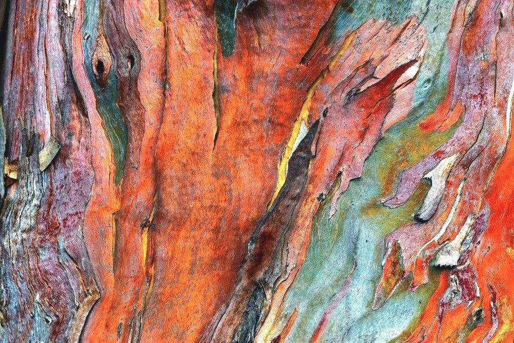 Bark, Eucalyptus #6, San Simeon