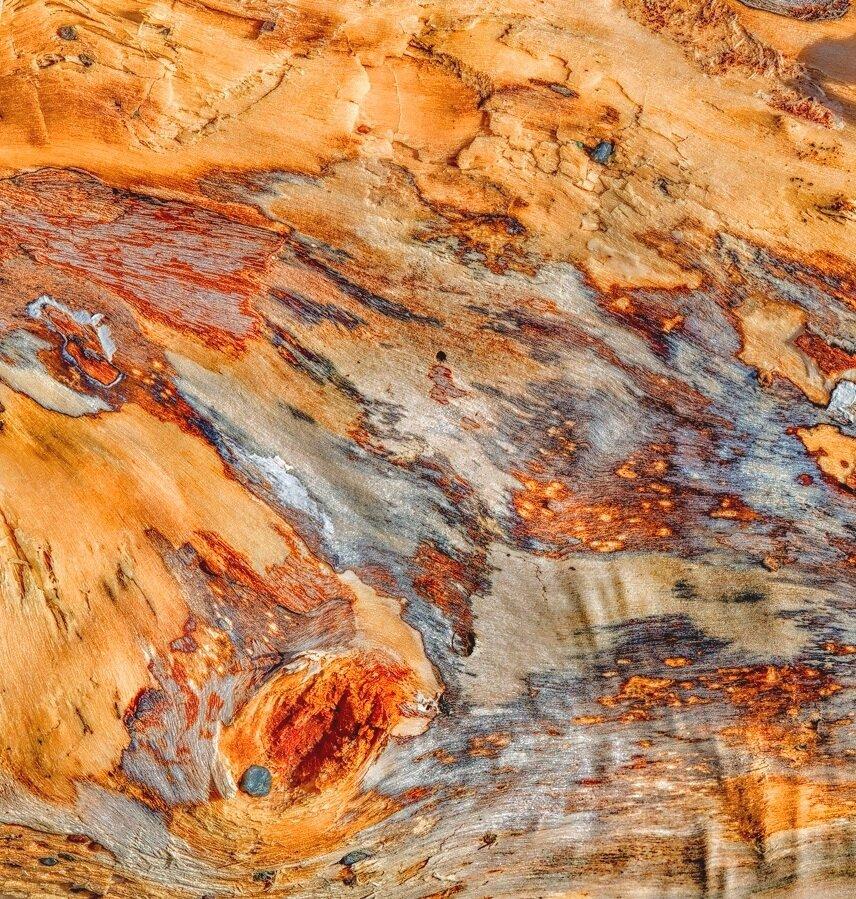 Driftwood Detail 44