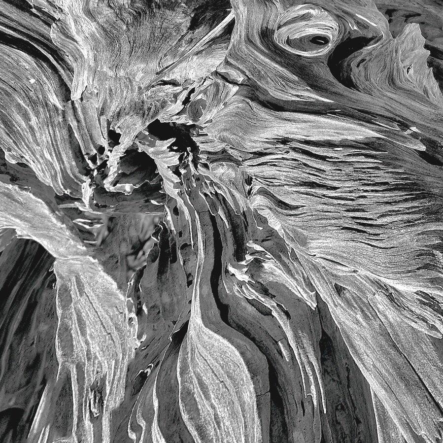 Driftwood #45a, Detail