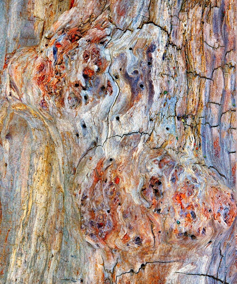 Driftwood Detail.jpg