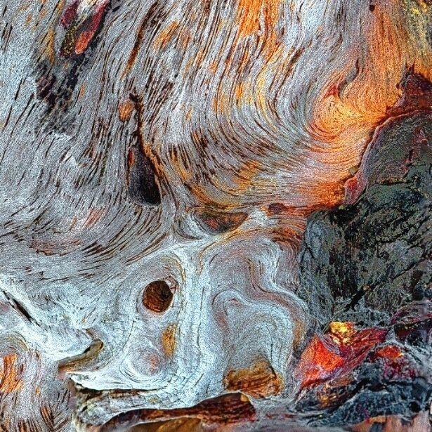 Fire and Ice, Driftwood Detail, Moonstone Beach