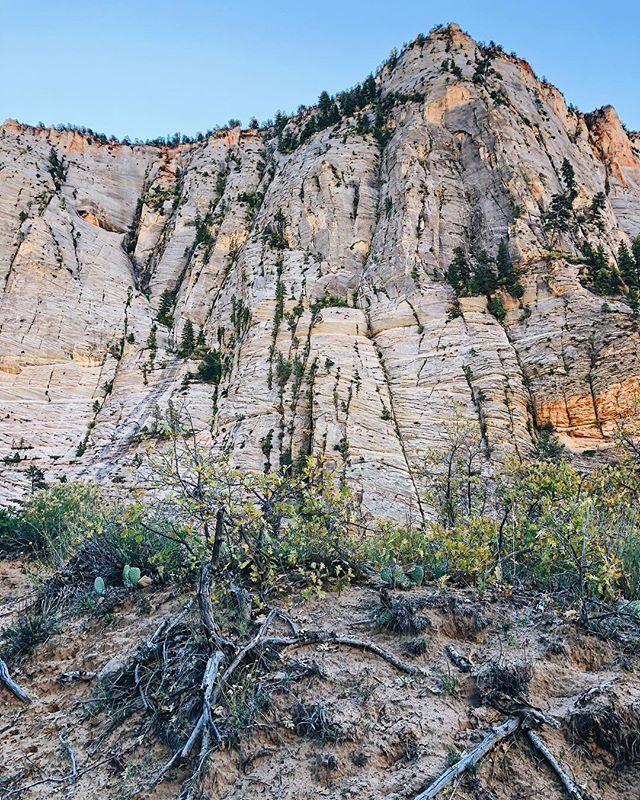 Day 2: Zion National Park. It took us 40 min to drive from South to East Entrance. That's how massive this place was. We hiked a total of 8 miles to Observation Point (the top top of the last picture). We went up 6,700 feet in elevation. 3 hours up. 2 hours down. That windy path you see. Yep we hiked that. #oneyoungtraveler #OYTNationalParkTour #ohwehikehike
