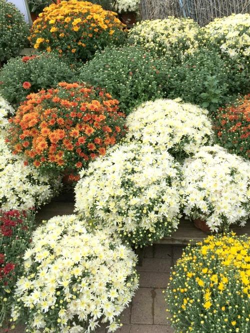 i <3 fall flowers