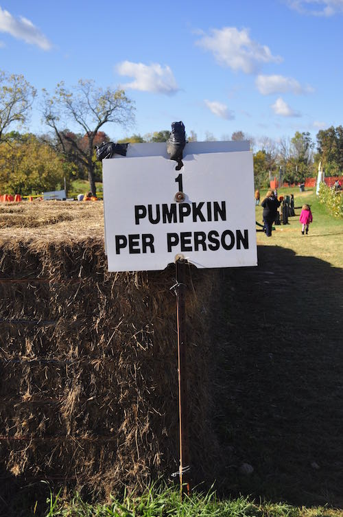 pumpkin pick 15 sign1
