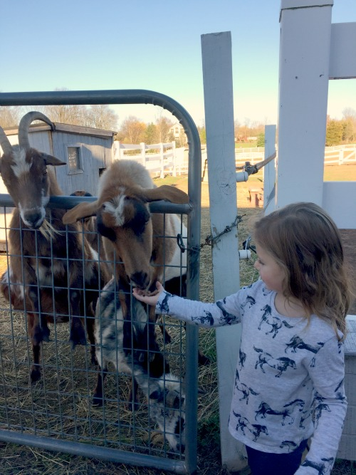 fall 15 goats1