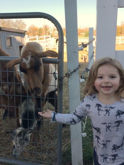 fall 15 goats3