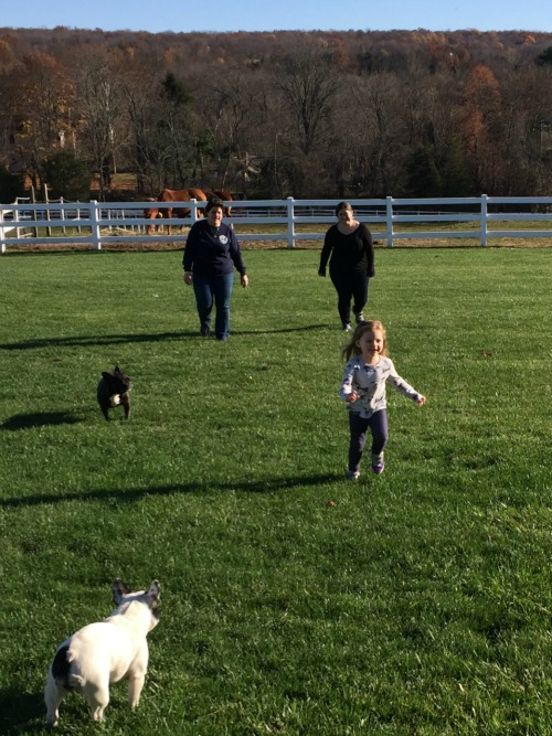 fall 15 dogs running