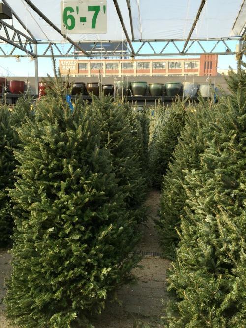 christmas 15 tree2