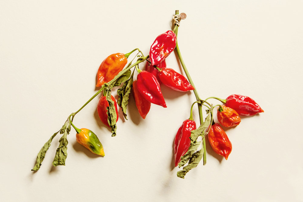 ghost_peppers_12x18.jpg