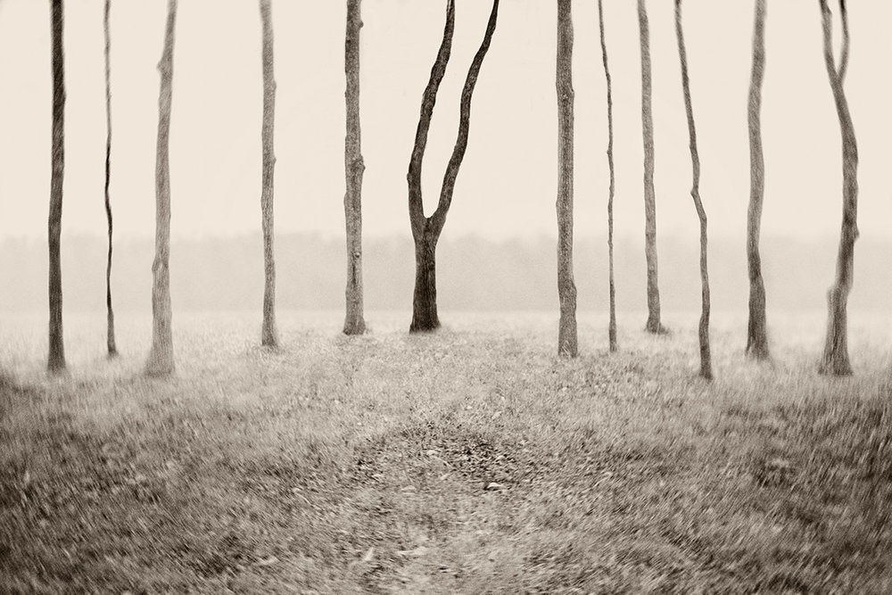 treeso.jpg