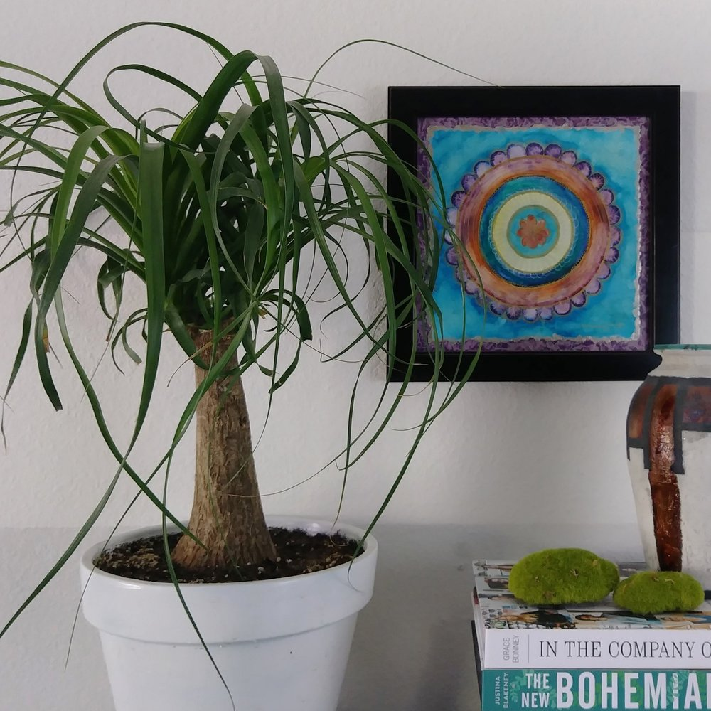 Easy to care for houseplants for eclectic home - ponytail palm - with Springtime Sunset Mandala original art - Effortlessly Eclectic art & decor