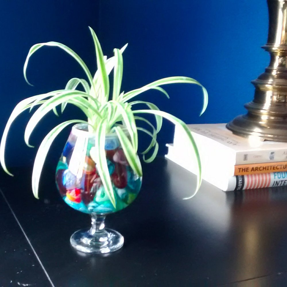 Easy to care for houseplants - spider plant baby - Effortlessly Eclectic art & decor