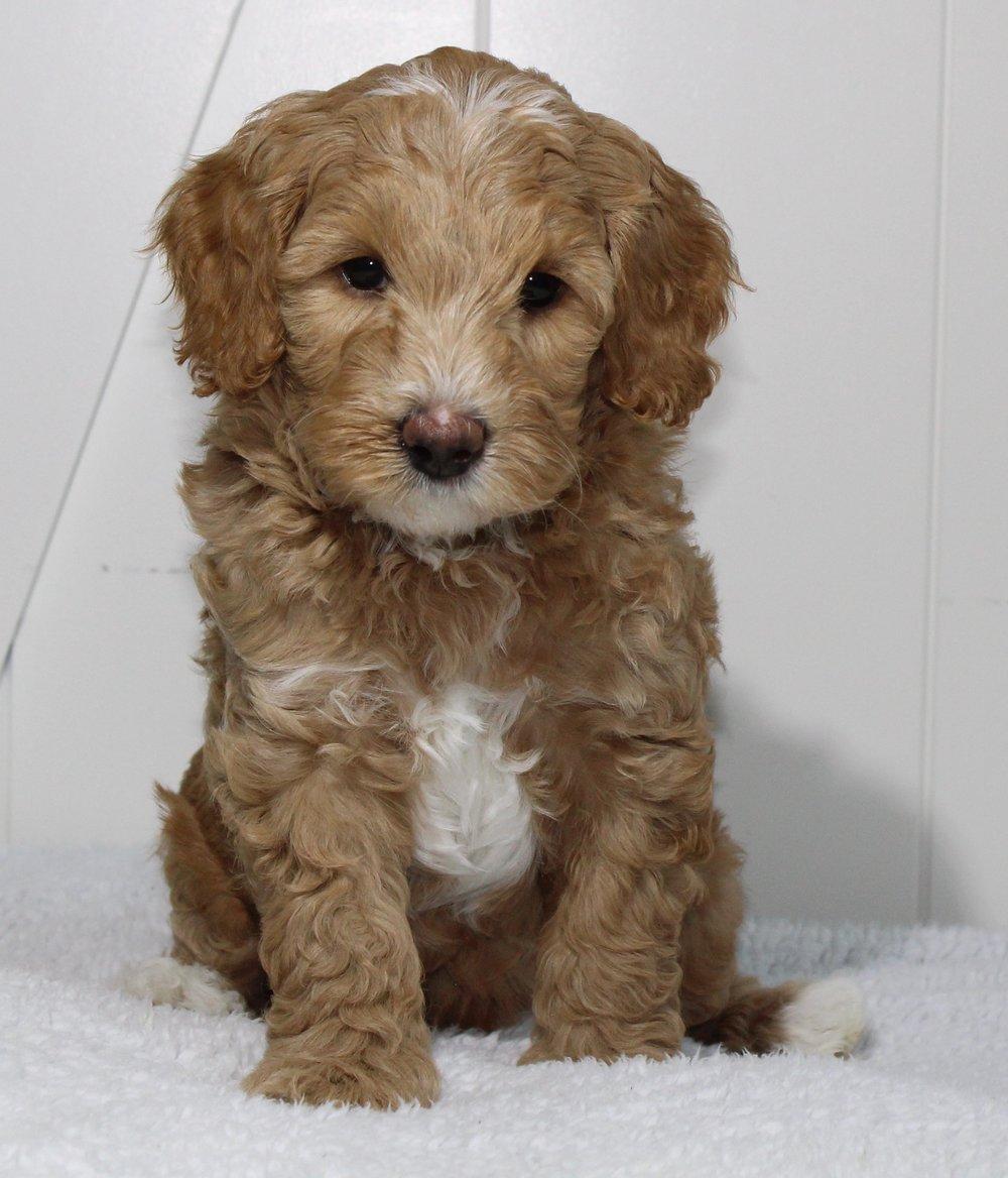 Tristan 6 weeks love.jpg