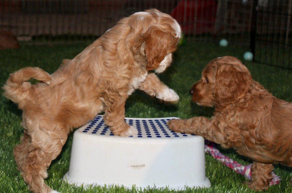 Sarafina and Timon play.jpg