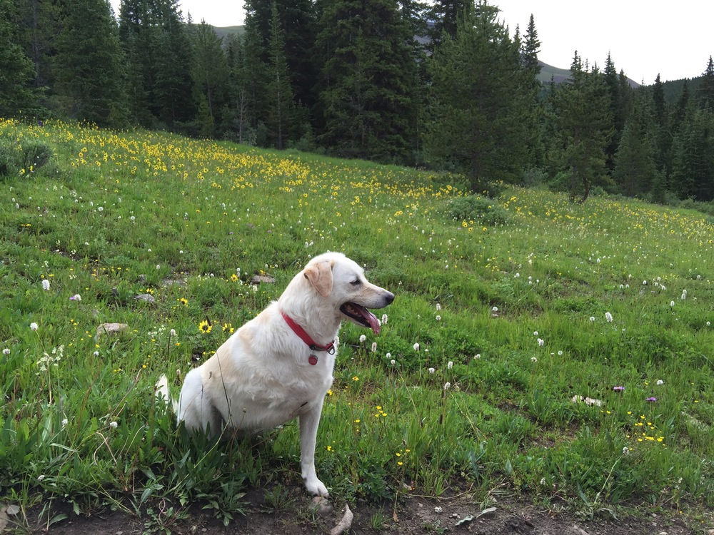 Lucy in Boreas Pass