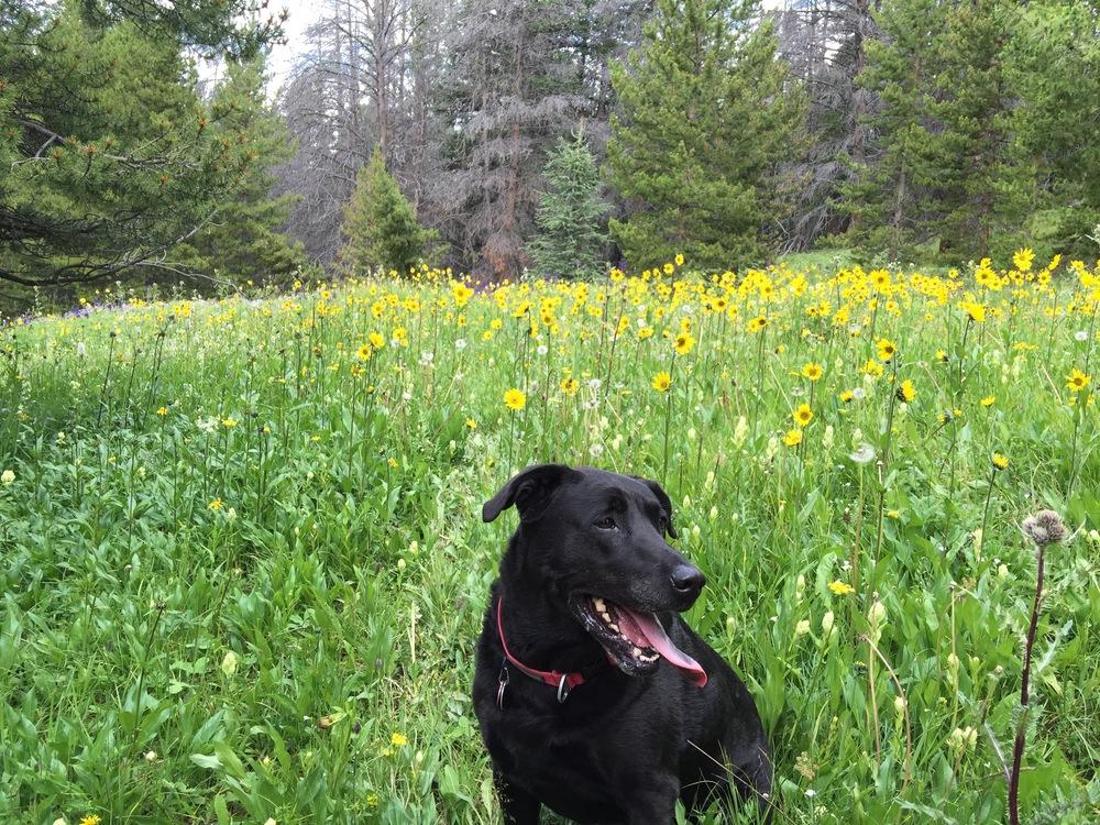 Fabi and Flowers - Boreas Pass