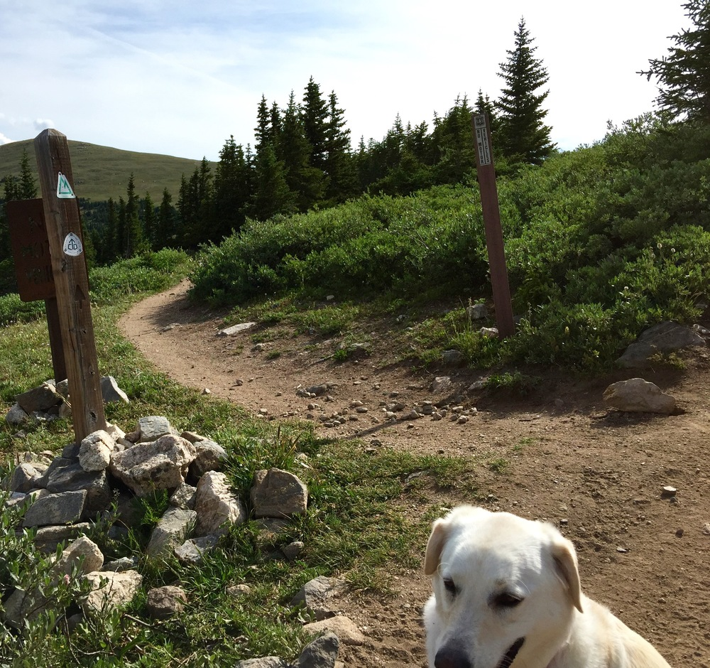 Lucy poses near the Colorado Trail sign - Georgia Pass