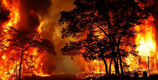 Fever In The Forest Fire In The Head Comparative Essay