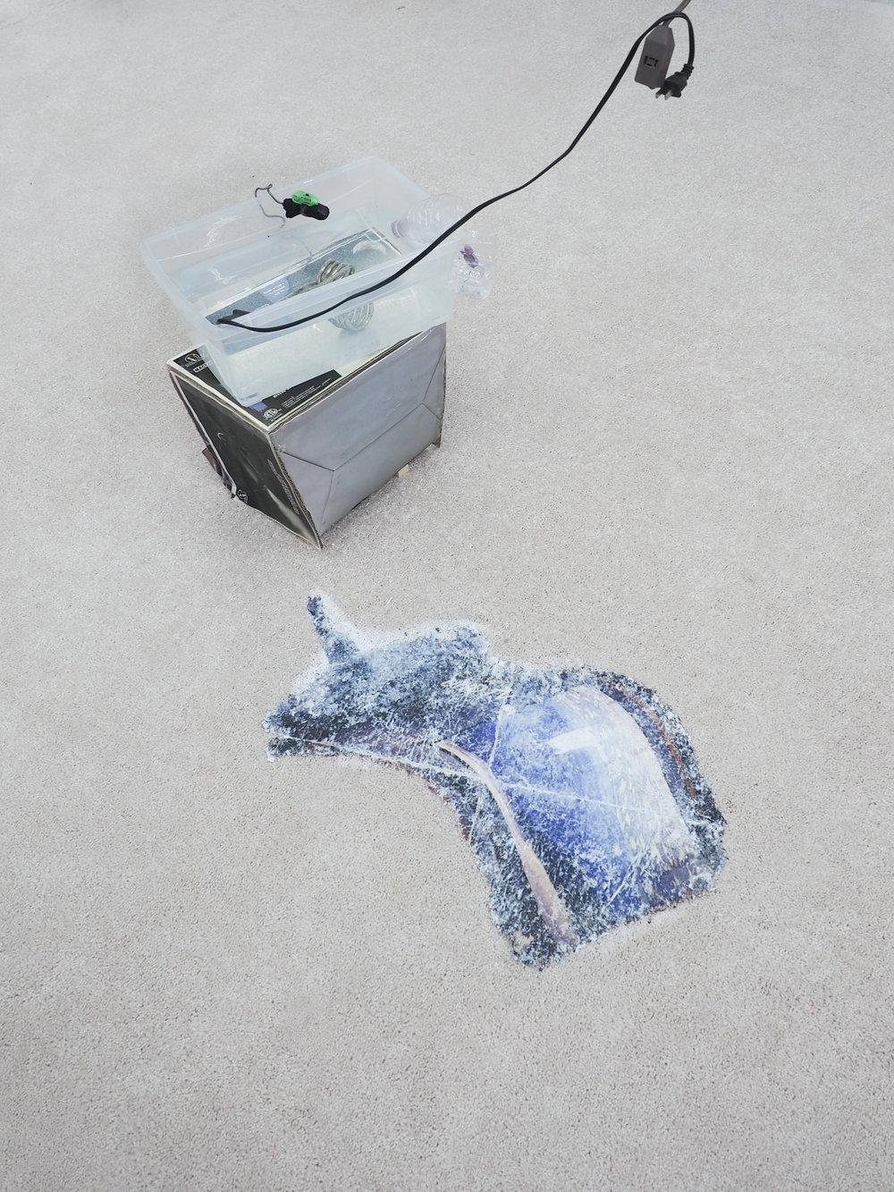 Vacuum,Irina Jasnowski Pascual image transfer on carpet