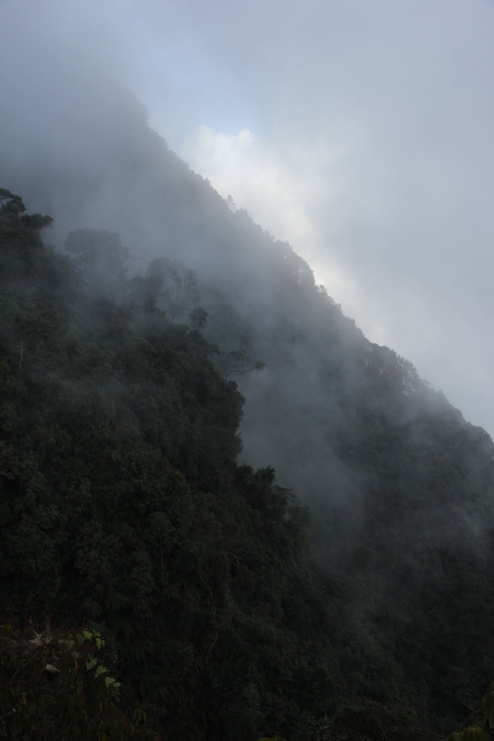 Tropical cloud forest, Colombian Andes, near Bogota, Colombia