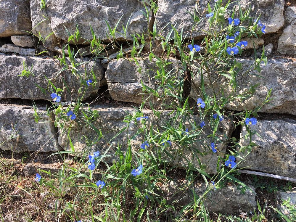 FlowersOnWall.jpg