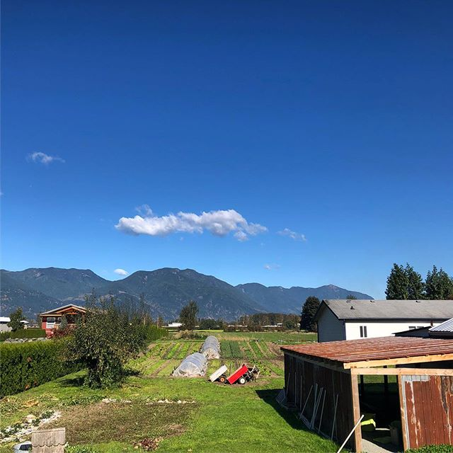 Fall out here feeling fresh AF 👌 + - [ ] #chilliwack #abbotsford #fraservalley #thefraservalley #marketgarden #marketgardening #organicfarming #organicfarm #sustainablefarming #sustainablegardening #smallfarm #urbanfarm #growfoodnotlawns #knowyourfarmer #locallygrown #homestead #homesteading #realfood