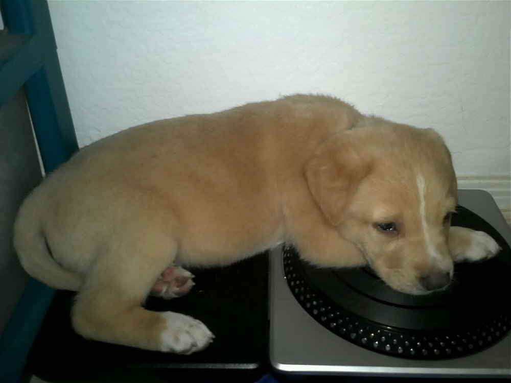 TK on DJ Hero