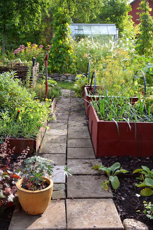 I pallkragarna kan du odla både kryddor, blommor, grönsaker och bärbuskar. Du kan starta riktigt tidigt med ett skydd av odlingsväv, gamla fönster eller ett plasttält.