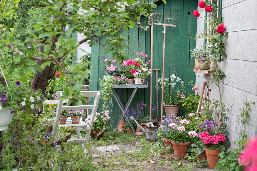 Foto:Blomsterfrämjandet/Minna Mercke Schmidt