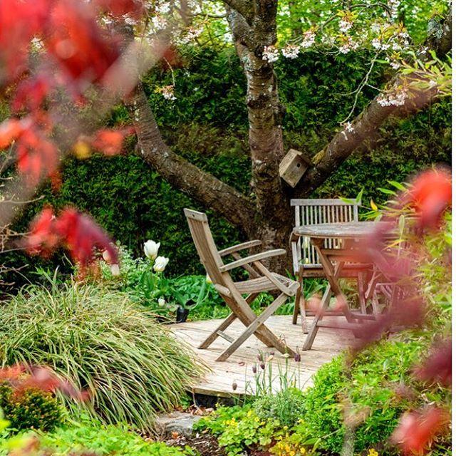 Var vill man vara nu? Om inte i en underbar trädgård! Häng med till trädgårdsdesignern @mariapaalmbacken just nu på himma.io text Pernilla Fredholm. #hoshimma #trädgård #gardenlife #grönafingrar