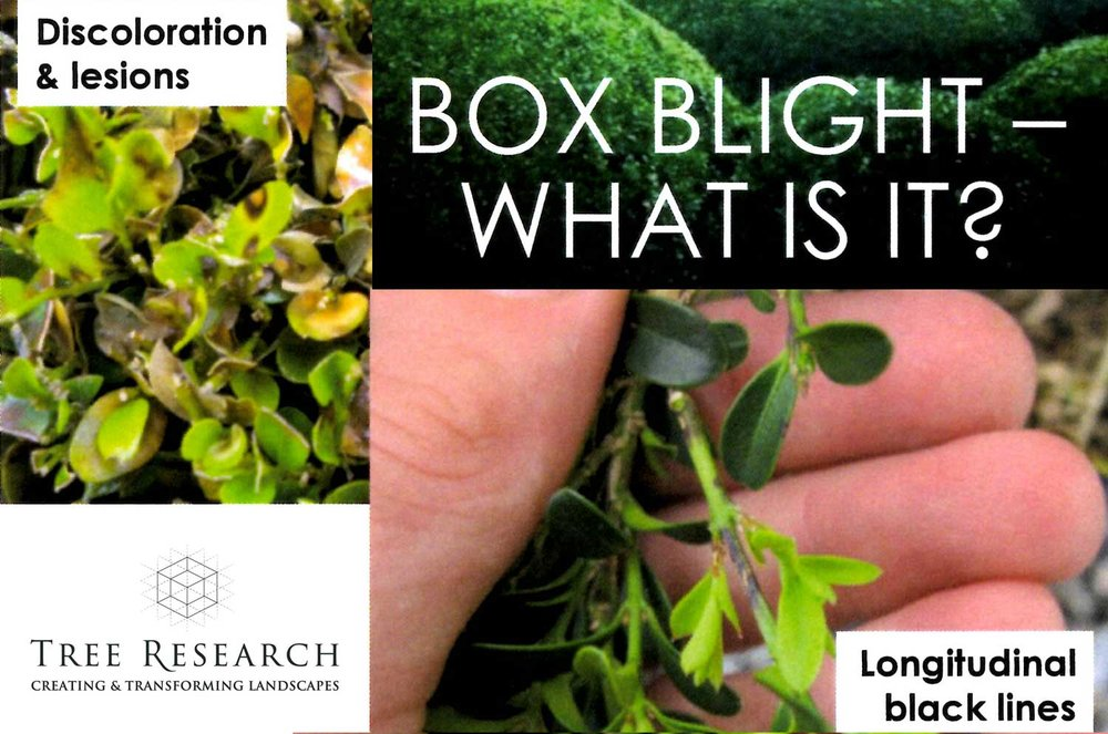 Box Blight new logo.jpg