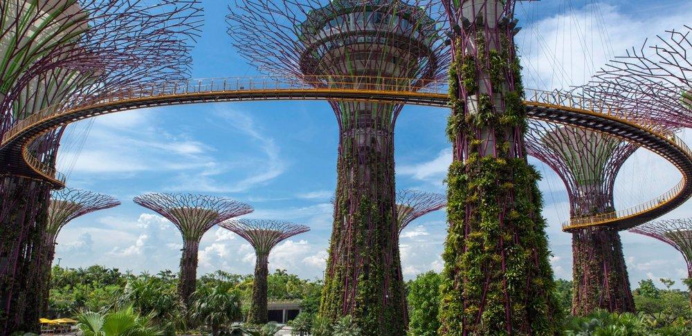 I.E SupertreesSNG233_N717-carousel.jpg