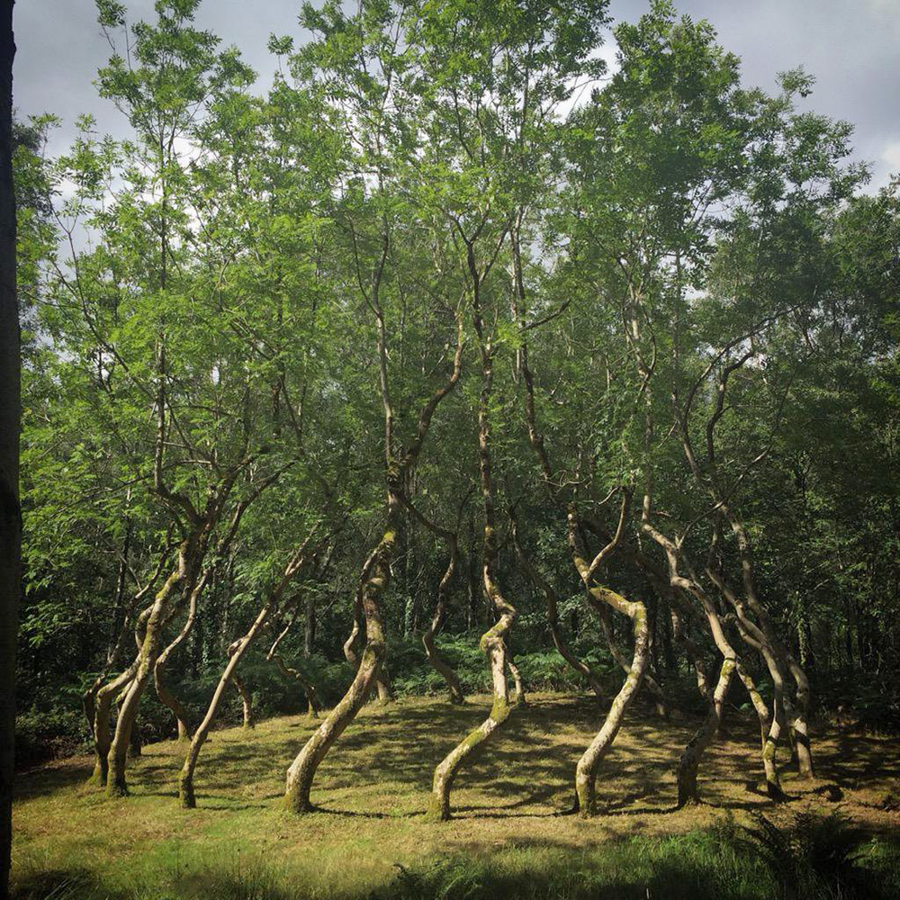 In 1977, sculptor David Nash cleared an area of land near his home in Wales where he trained a circle of 22 ash trees to grow in a vortex-like shape for an artwork titled Ash Dome.