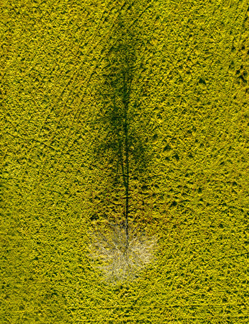 Fromtheair-tree s.jpg