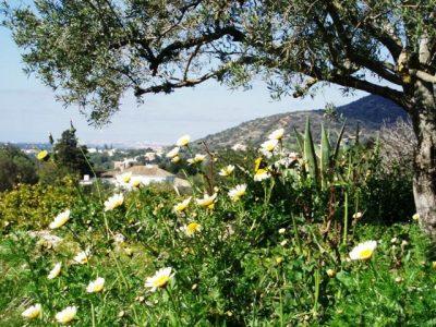 5.-Quinta-Mimosa-Views-400x300.jpg