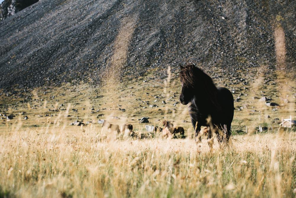 horse-007_o.jpg