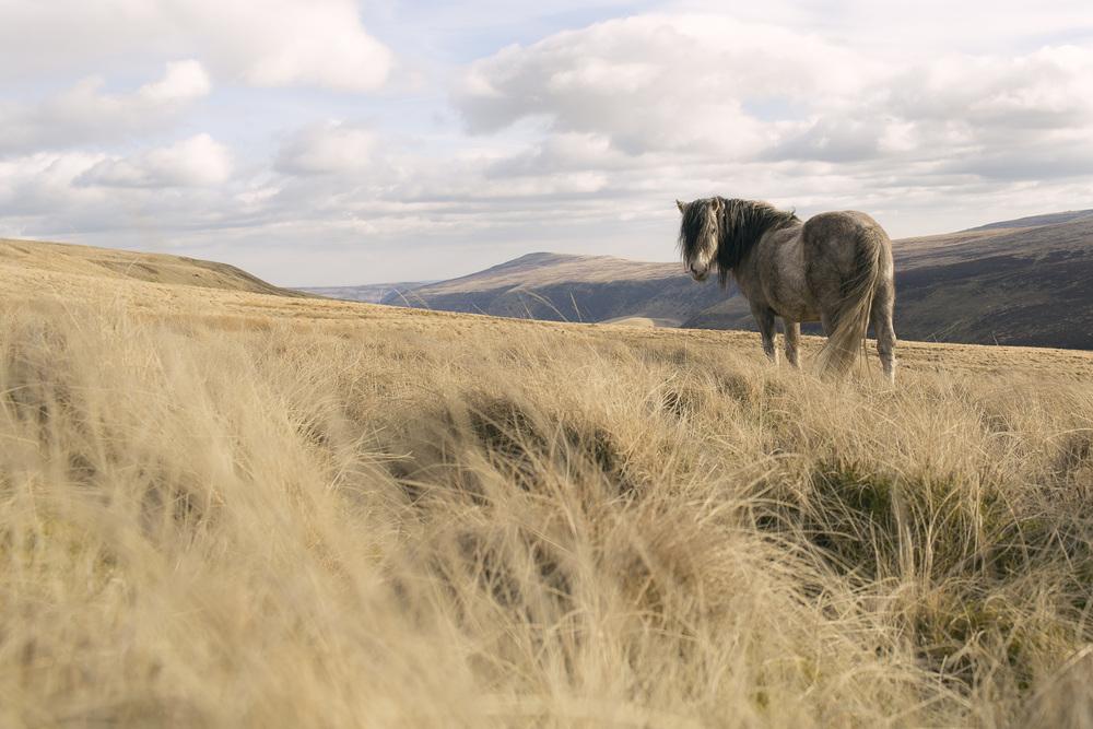 Horse-1_o.jpg