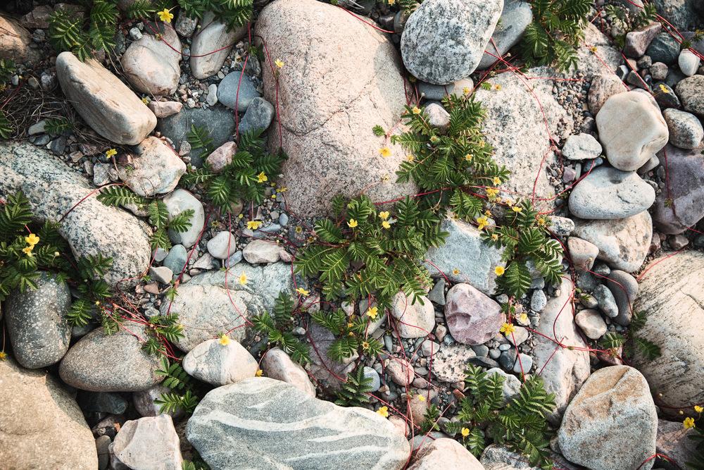2015-06-DestinationCanada-Newfoundland-332.jpg